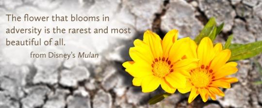 flower-blooms