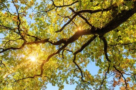 oak-3762946_1280.jpg